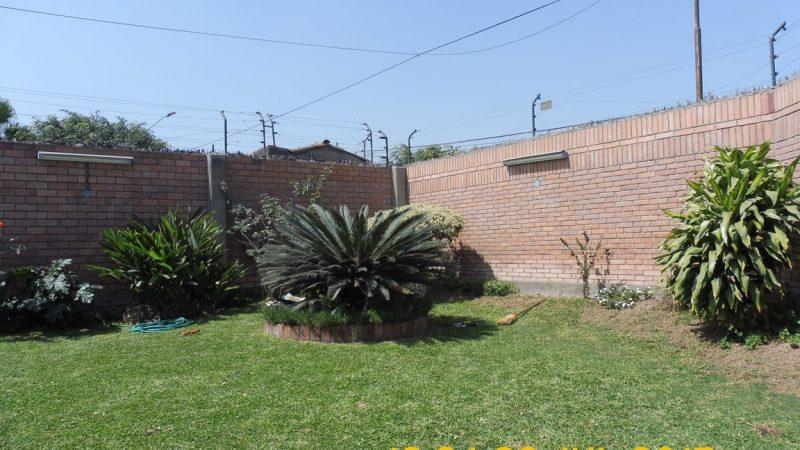 jardinpalmera